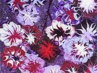 Paarse bloem 120